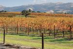 Thumbnail for Harvest Wine Celebration