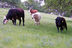 Thumbnail for Farm Smarts