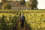 Thumbnail for Bordeaux Lord