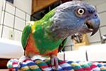 Thumbnail for Bird Boom