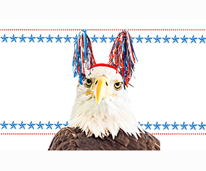 Metro Cover Story Photo: 101 Ways to Make 'Merica Great Again