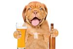 Thumbnail for Pints for Pups: Beer, No Bite