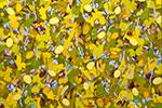 Thumbnail for Life's Seasons