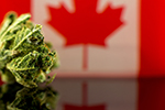 Thumbnail for Canadian Cash Pours Into San Jose's Pot Sector