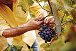 Thumbnail for Harvest Report